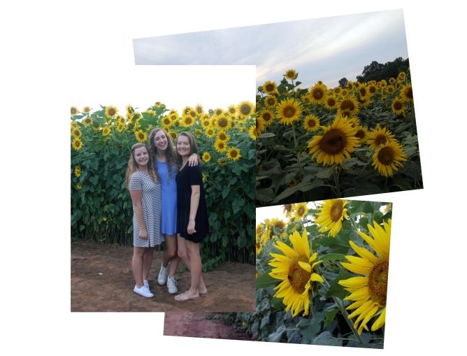 sunflower collage